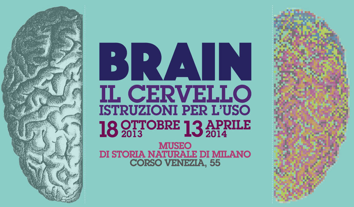 marisa coppiano brain