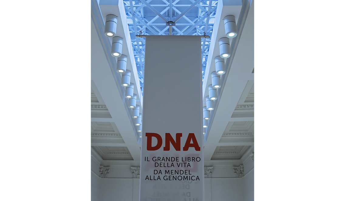 marisa coppiano DNA